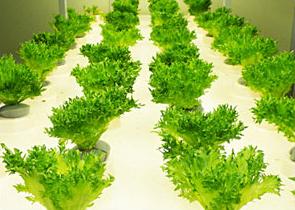 植物工場の運営・販売